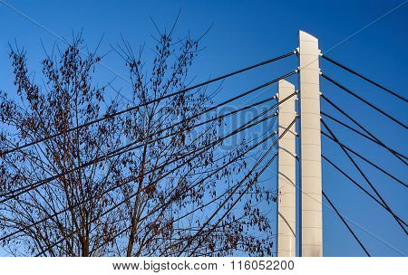 Cable-stayed bridge pylons and tree branches