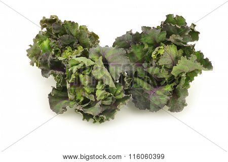 freshly harvested kale sprouts on a white background
