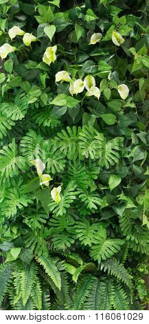 Group Of Green Leaf Background