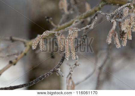 Frozen details on a tree