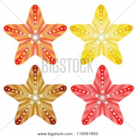 Starfishes isolated. Vector set, EPS10.