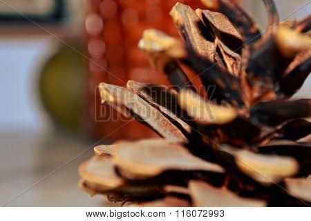 Close-up pinecone