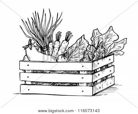 Hand Drawn Vector Illustration -fresh Vegetables. Supermarket. Grocery Store. Organic And Vegan Food