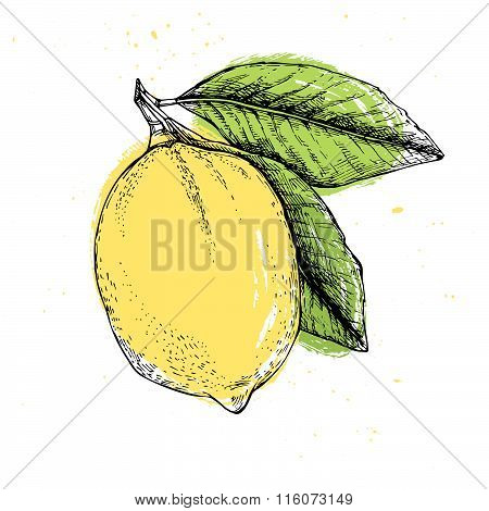 Hand Drawn Vector Illustration - Lemon