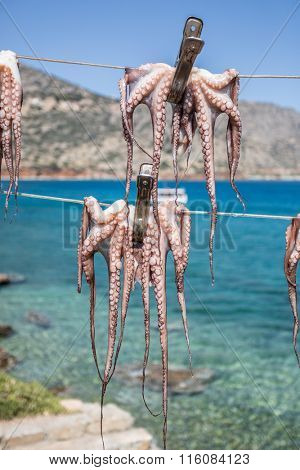 Fresh octopus in the boat port.