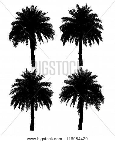 Four Palm Trees Silhouette Collection Isolated On A White Background With Clipping Path