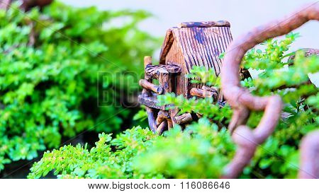 Close up bonsai trees decorated model home
