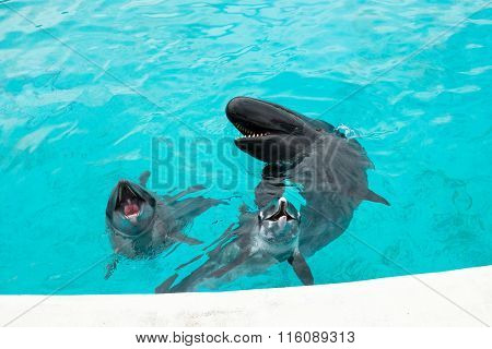 Dolphin and Whale ask for food