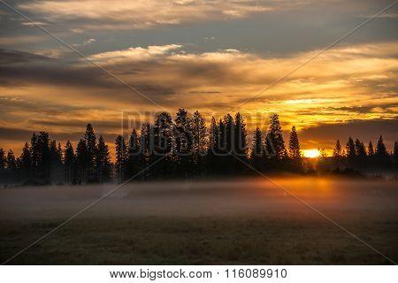 Misty Meadow At Sunrise