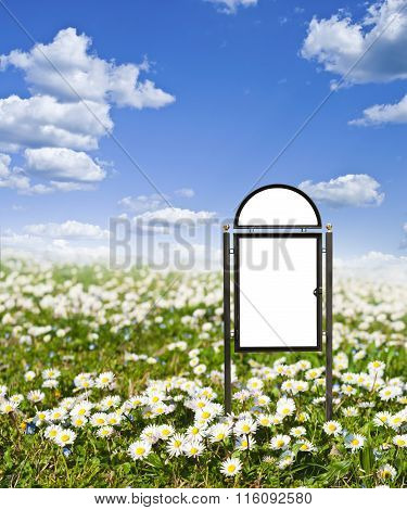 Bank for your text on the background field of daisies.