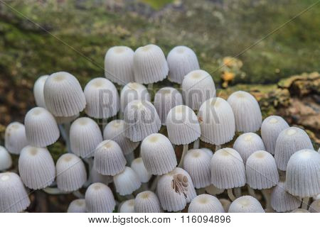 Mushrooms Growing On A Live Tree In The Forest