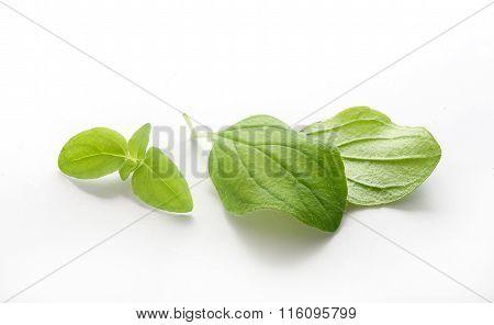 Leaves Of Oregano