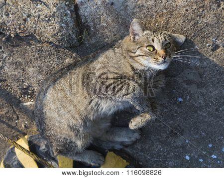Gray-brown Cat Indulges