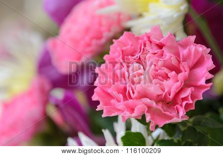Pink Carnation In Bouquet