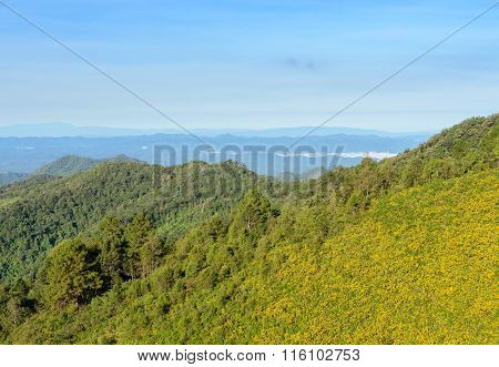 Mountain Nature Landscape With Mexican Sunflower