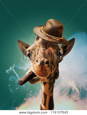 Cool giraffe with cigar and hat.