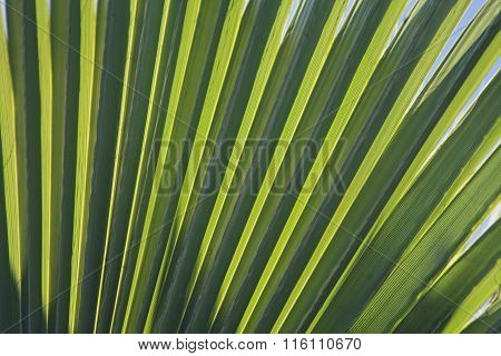 Palm leaf in back light