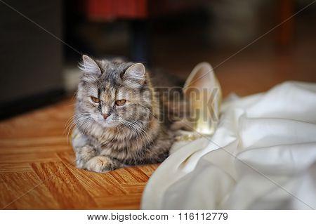 Beautiful Small Kitten Near The Bride Dress