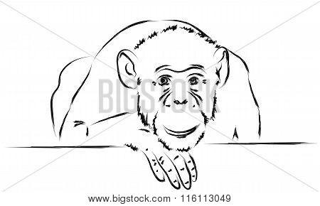 Sad Monkey Put Her Head On A Paw