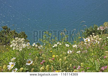 Variety Of Wildflowers At Alpine Lake Shore Lunersee