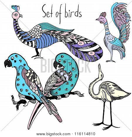 Set of hand drawn multicolor birds