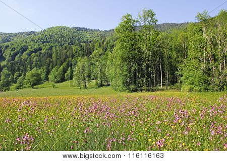 Alpine Landscape With Wildflower Meadow And Green Hills