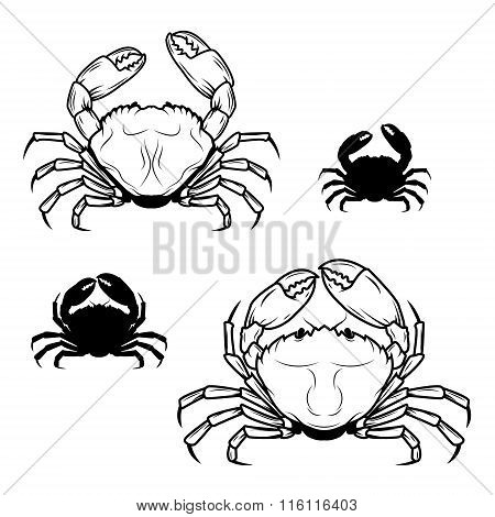 Set Of Crabs Illustrations In Vector.