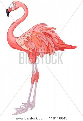 Illustration of rosy flamingo