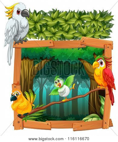 Four birds living in the jungle illustration