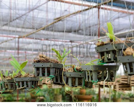 Orchid Plants In A Nursery