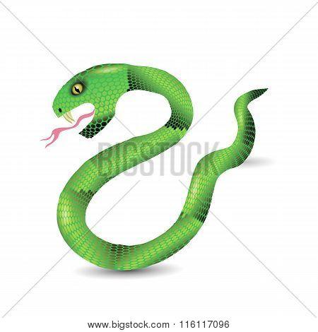 Cartoon Green Snakes