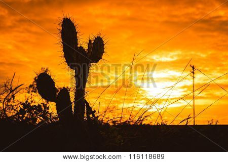 Silhouette Of Saguaro Cactus At Sunset