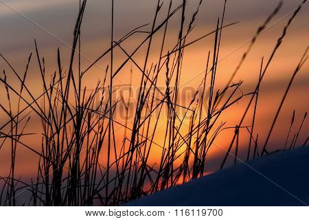 Sunset Dry Grass Snow Background