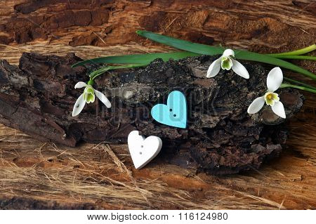 Hearts and snowdrops