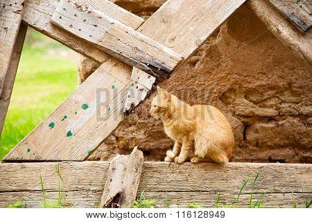 Feline In Morocco Africa  Sweet Face