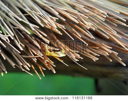 Broom Broomsticks closeup
