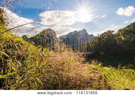 Summer Landscape In The Mountains. Green Forest