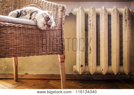 Cat Lying On A Chair Near The Hot And Heated Battery