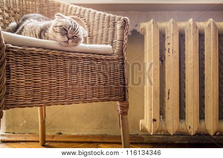 Sweet Cat Sleeps On A Chair Near The Hot And Heated Battery