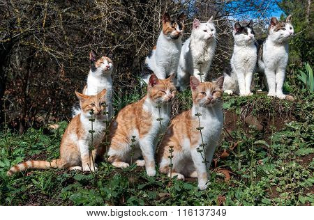 Many cats are sitting on the grass together.