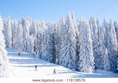 Vibrant panorama of the slope at ski resort Kopaonik, Serbia, people skiing, snow trees, blue sky