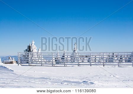 Vacation rural winter background with white pines, fence, snow field, mountains