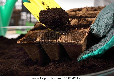 Domestic cultivation, sowing plants