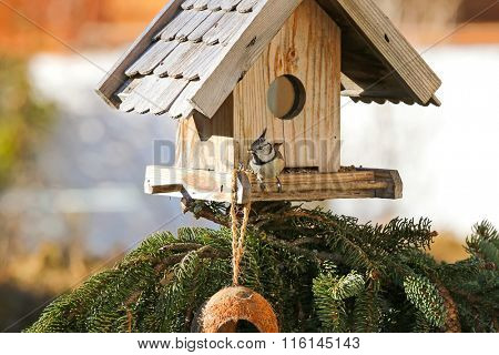 Cute European Crested Tit bird (Lophophanes cristatus) eating hemp seeds on the wooden bird feeder in the winter in Austria