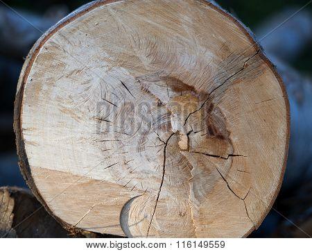 single round log top view