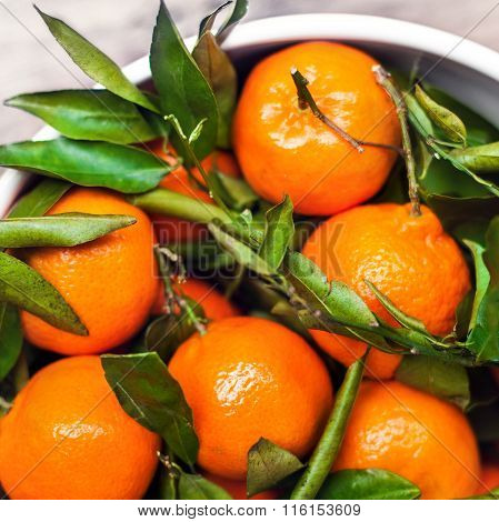 Fresh Picked Tangerine Clementines In White Bowl