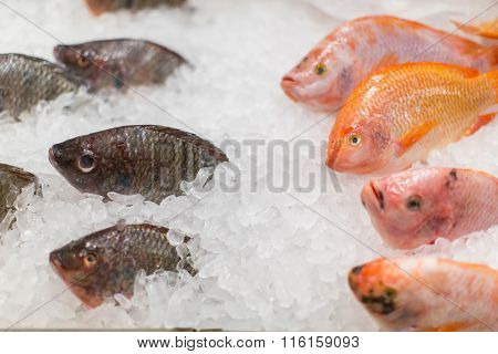 Frozen fish in ice in the store.
