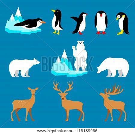 Vector set Arctic and Antarctic animals. Penguin, polar bear, reindeer.