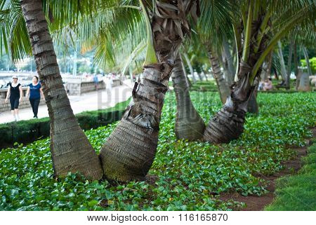 Palm trees in a park on the waterfront of the city of Vung Tau, Vietnam