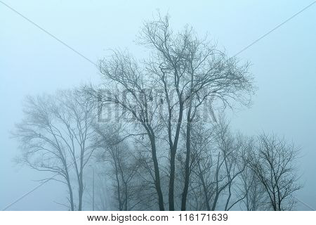 Gloomy Misty Landscape With Trees And Crows